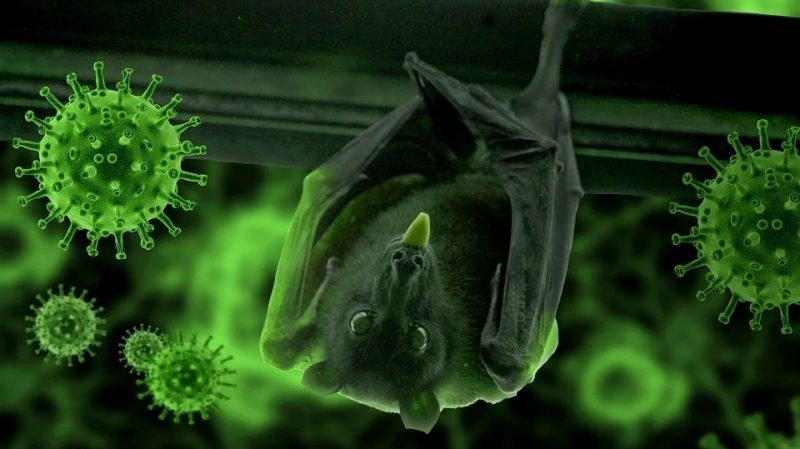 Bats have nothing to do with it scientists found out who transmitted the coronavirus to humans