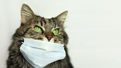 Photo of Coronavirus confirmed in cat in Hong Kong