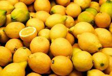 Food Lemon