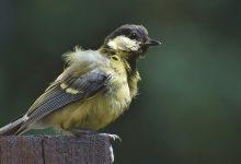 In Germany an unknown disease kills birds