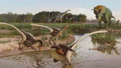 Scientists have discovered what a feathered dinosaur looked like million years ago