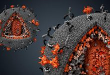 The scientist told how viruses contributed to human evolution
