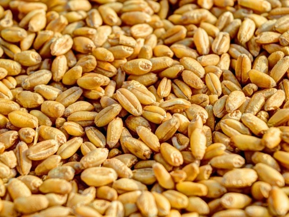 The world warned of a shortage of Russian wheat
