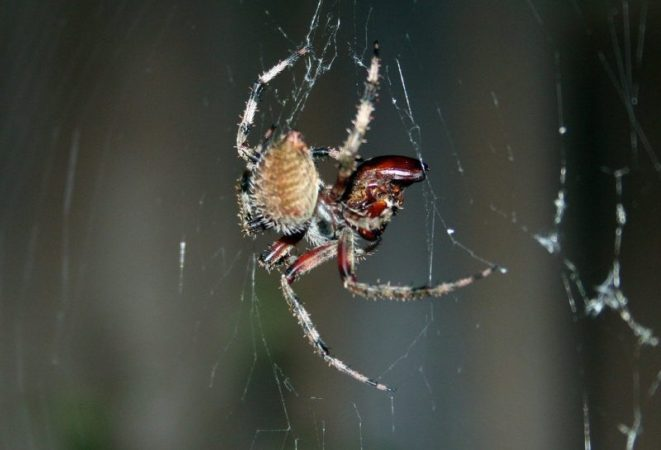"""""""Dont Get Anyone Else"""" Cruel Love in the Spider World"""