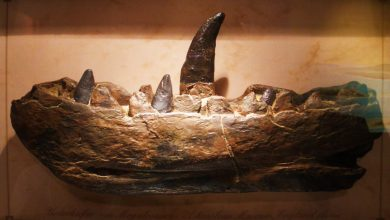 fossils that changed the look at dinosaurs