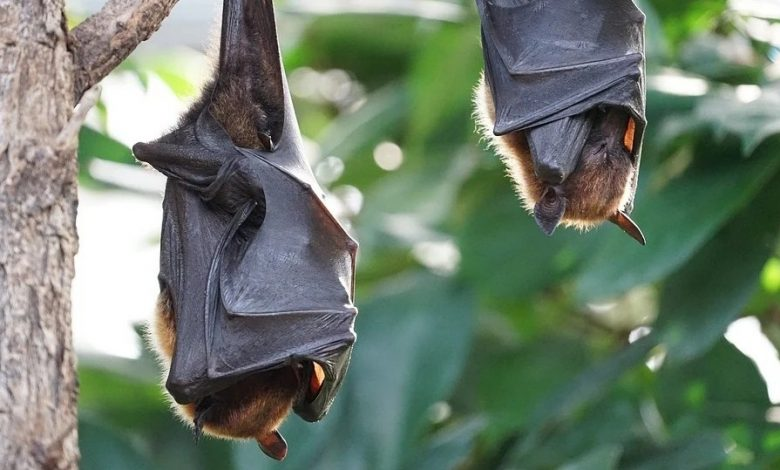 Bats are massively killed in China and Europe