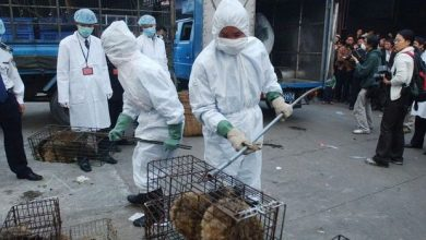 Chinese authorities say Wuhan seafood market was not a source of coronavirus
