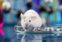 Chinese biologists have created a new strain of coronavirus SARS CoV capable of infecting rodents
