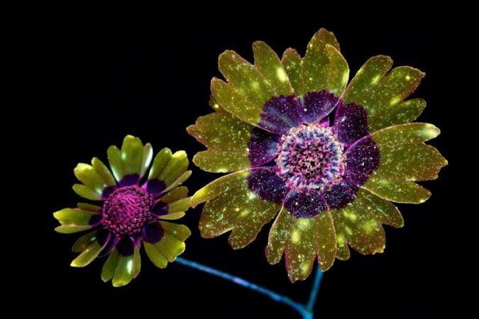 Cosmic flowers