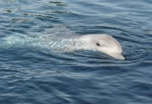 Dolphins sailed to Finland