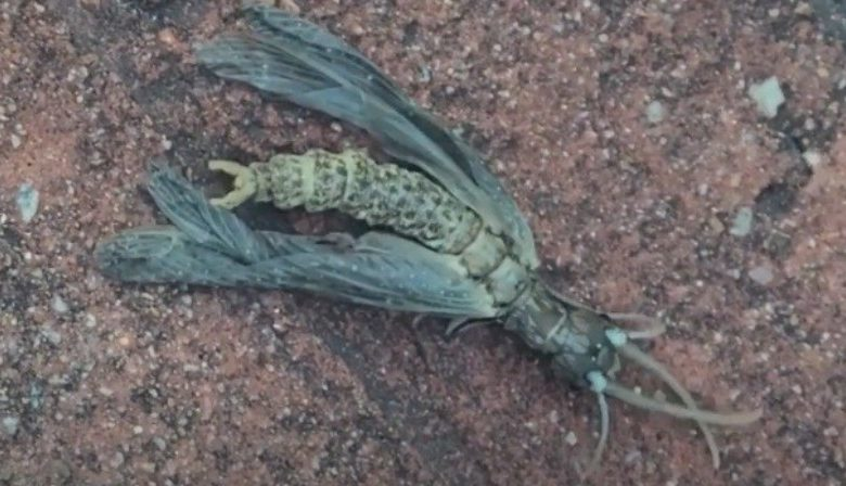 """Georgia discovered an """"alien"""" insect"""