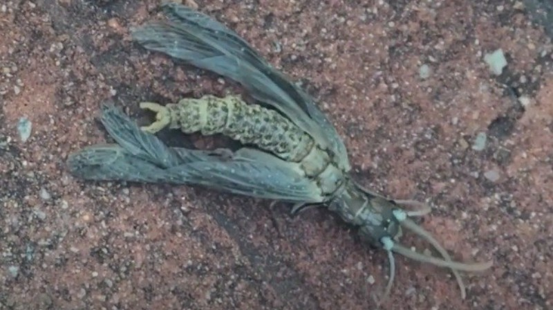 "Georgia discovered an ""alien"" insect"