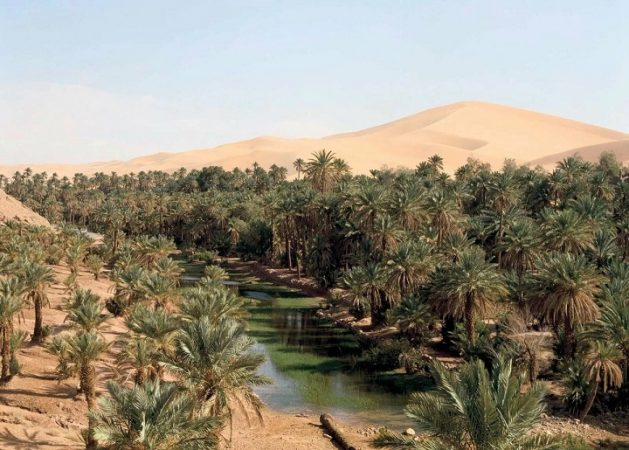 Global warming will turn the Sahara into a blooming garden