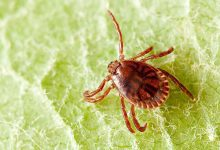 Hybrid ticks found that carry more diseases over long distances