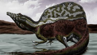 In Morocco discovered the remains of a waterfowl dinosaur