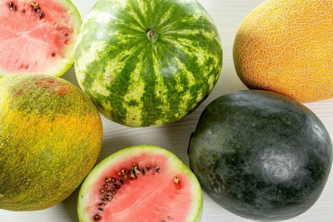 In the Arctic began to grow melons and watermelons