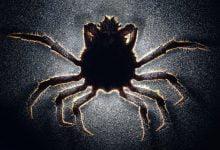 Parasites enslavers of the brain