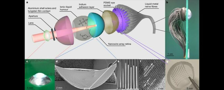 Scientists have created a bionic eye that works almost like a real one