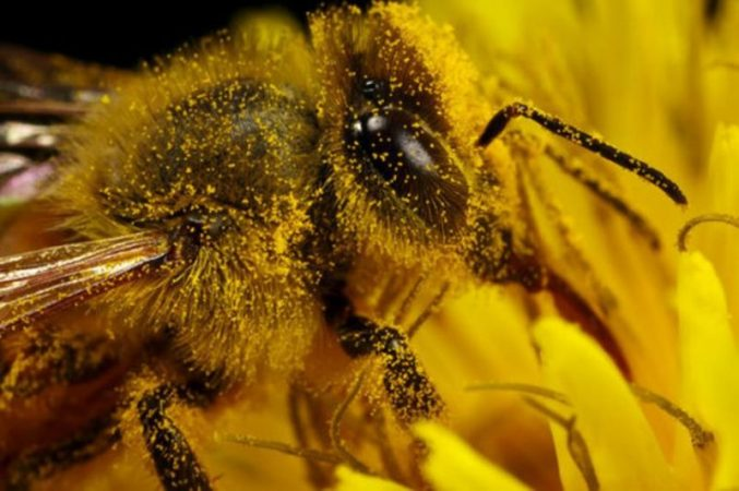Scientists have discovered a virus that can turn bees into zombies