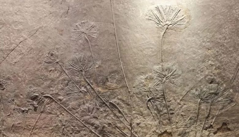Scientists have found a plant more than million years old