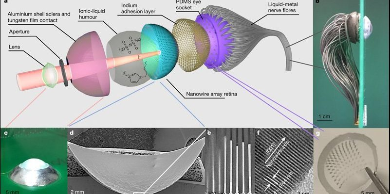 Scientists reveal evidence of the concept of the bionic human eye