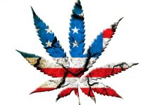 Self isolating with weed coronavirus caused boom in legal marijuana industry in the US