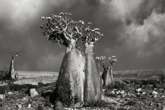 The oldest trees on the planet
