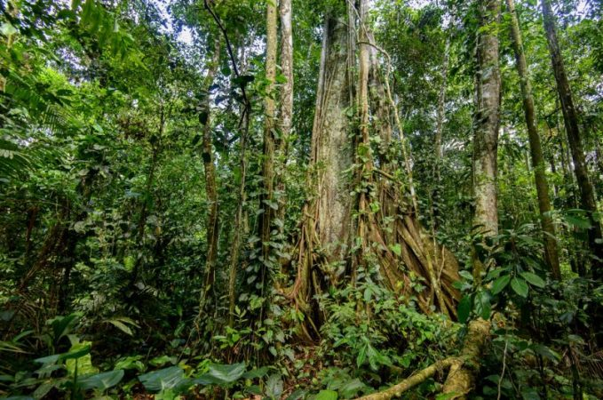 Tropical forests could release carbon with global warming