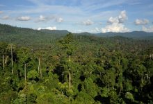 Two degrees warming will undermine tropical forest biodiversity