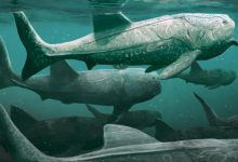 What fed the huge armored fish million years ago