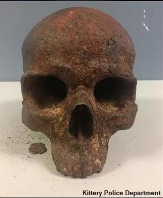 skull news