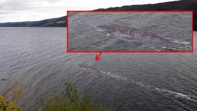 Photo of A resident of the UK claims to have captured the Loch Ness monster