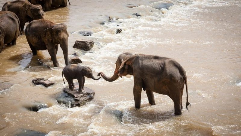 Africa unknown reasons killed more than hundred elephants
