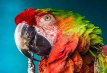 Can animals understand human speech