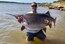 Fisherman caught an incredibly large paddlefish