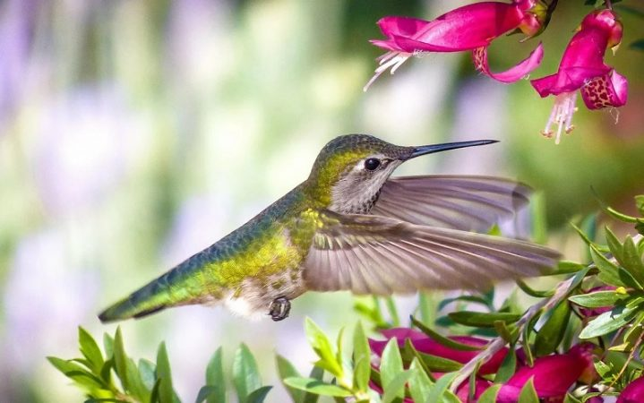 Hummingbird sees colors that a person cannot even imagine