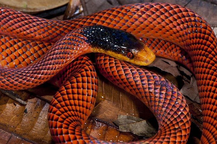 Indian discovered at home 40 poisonous snakes