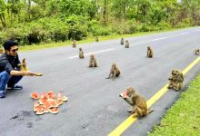 Monkeys in India keep social distance