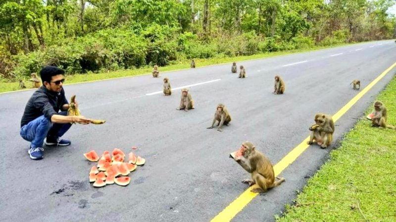 Monkeys in India keep social distance