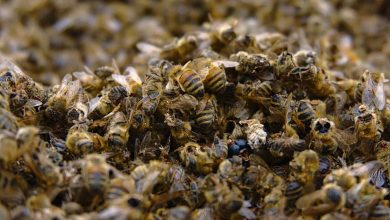 Photo of Record number of bees died over the past year in US