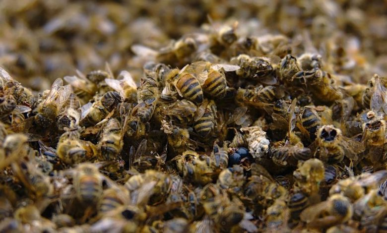 Record number of bees died over the past year in US