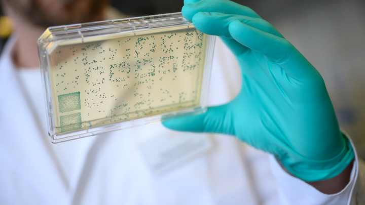 Specific bacteria found in the cells of almost all cancers 2
