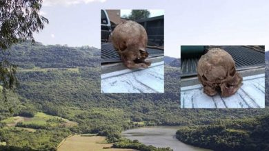 Very strange skull was discovered at a ranch in Texas