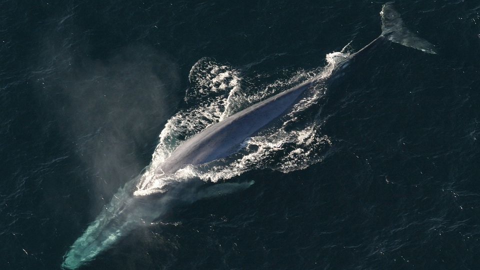 Why thousands of species of animals headed for the poles of the Earth