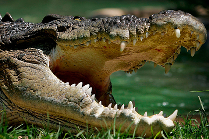 A combed crocodile dragged a merchant of milk under water