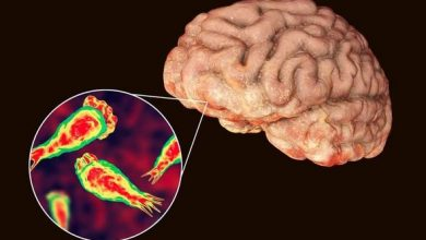 Photo of Amoeba discovered devouring human brain