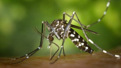 Photo of Dengue fever attacks Asian countries (symptoms)