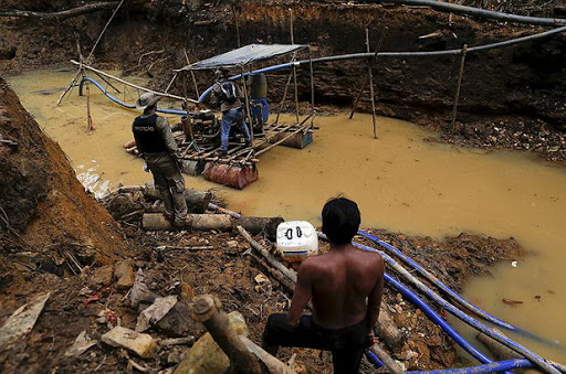 Fish in the Amazon River contaminated consequences of illegal gold mining