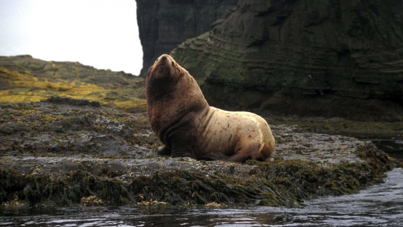Five sea lions died under mysterious circumstances