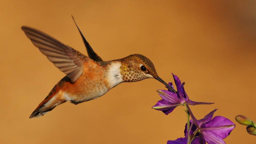 Hummingbirds were able to understand the concept of numerical order 2